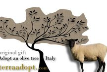 Adopt an Olive Tree / Adopt and olive tree in Italy to protect farmers' livelihoods and receive three bottles of extra virgin olive oil direct from your chosen grove.