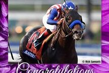 2014 Breeders' Cup / by The Blood-Horse