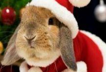 Kerst en zo