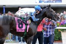 Upstart / by The Blood-Horse