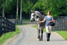 Off Track Thoroughbred Care (OTTB) / Information and resources on OTTB's.  / by Blood-Horse