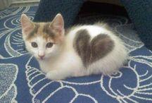 Katten met een hart