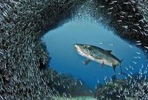 underwater life / animals