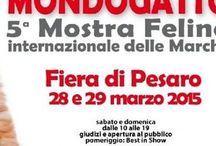 MONDOGATTO Pesaro 2015
