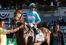 Lady Eli / by Blood-Horse