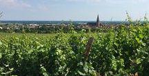 Alsace - Route des Vins