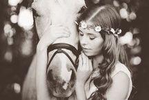 photographie horses