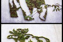 moss grafity