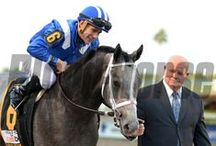 Mohaymen / by Blood-Horse