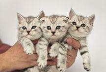 Dieren l Katten / Dieren l Katten
