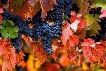 Una copita de buen vino