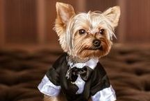Wedding Pet Ideas
