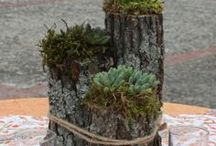 Plant Holders / Plant Holders for Hens and Chicks. Succulent Containers.