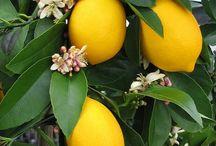 Fruit / by Pam Manuel