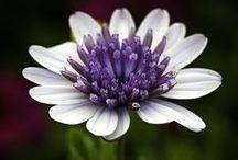 "Bloomy Flowers / ""Where flowers bloom, so does hope"" - Lady Bird Johnson"