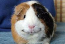 Animals / cute, awesome, beautiful, gorgeous animals that you never expect