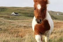 *Horses