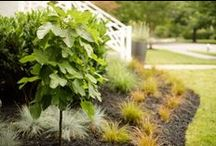 Planting Beds / A collection of photos from Cartwright Landscaping's projects.