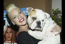 Celebrities and Pets