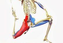 #human_body