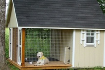 Shelter Ideas / by Stacy Craft