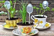 Gardening / Garden ideas, tips and tricks