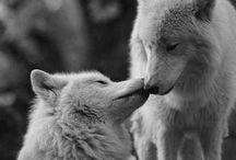 Animals / animals / by Tabitha Stambaugh