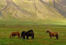 horses / my most favorite animal