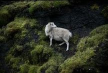 MyWork.Faroe Islands / © Soffi Chanchira Larsen.  Farao Islands