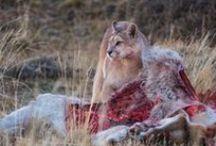 wild patagonia / animales en patagonia