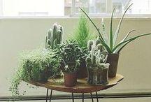 Roof terrace, gardens & plants