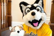 Nothin' But Huskies / Blizzard T. Husky, Bronze Blizzard and other Michigan Tech Huskies in action - plus a curated collection of Husky puppy cuteness. Mush!