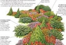 Evergreen Garden / by Anita Lee Hoa