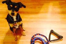 Dog Toys and Leashes / We are into dogs!  Check out our handmade Dog Toys!