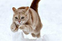 Katachtigen / Als de kat van huis is, dansen de muizen