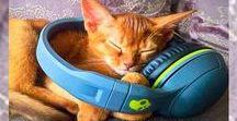 My Golden Aby - Абиссинские кошки / Всё что мы знаем об абиссинских кошках и котах. Абиссинцы - выбирай по фотографии и покупай себе абиссинца!!!