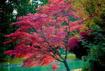 La nature est une beauté