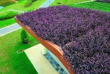 Telhado Verde / telhado verde, green roof, green vegetated roof, ecotelhado, telhado sustentavel
