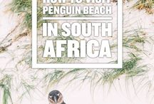 Travel South Africa / Trip planning and sights to see on a South Africa vacation.