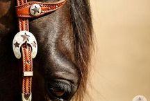 Horsessss / Animals