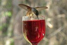 Pretty bird / by Liz Raae