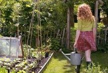 She Farms / Urban Farming in your garden.