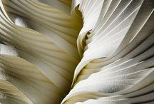 Plisse / by Hans Roege