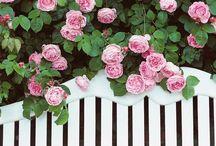 ::: garden ::: color / flower