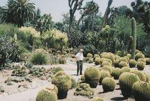 ::: garden ::: succulent / tolerant