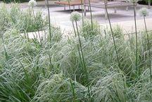::: garden ::: grass / green