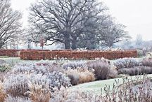 ::: garden ::: winter