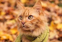 Kissoja / Kissoja ja sisustusta kissoille