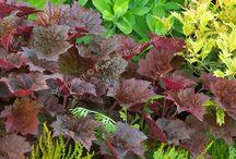 ::: garden ::: shade / color leaf