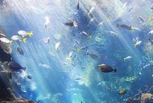 Fishes / Fishes